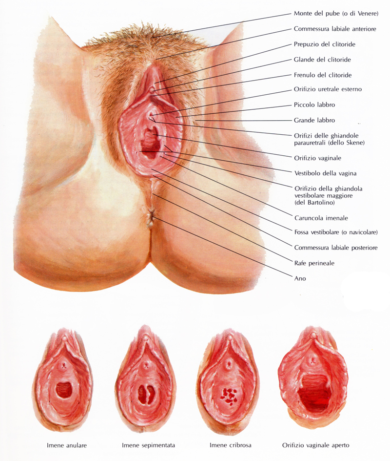 femmine erotiche massaggiatrici hot